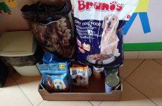 Więcej o: Podsumowanie akcji zbierania karmy